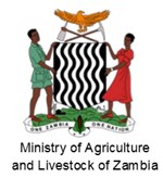 Maize-lethal-necrosis-disease-in-maize-Zambia-org-1.PNG