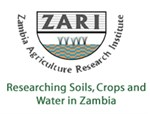 Maize-lethal-necrosis-disease-in-maize-Zambia-org-2.png
