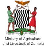 Serpentine-leaf-miner-on-beans-Zambia-org-2.png