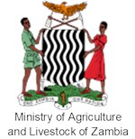 stalk-borer-in-maize-zambia-org-1.png