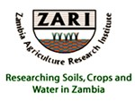 stalk-borer-in-maize-zambia-org-2.png